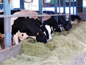 北海道での牧場で牛の世話をするバイトの話(リゾートバイトの体験談 20代男性)